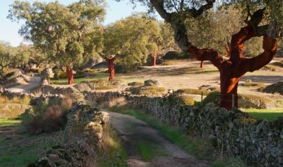 Treeking on Natural environment in Valencia de Alcantara between granitic batholiths and cork oaks Extremadura Spain ** Note: Soft Focus at 100%, best at smaller sizes