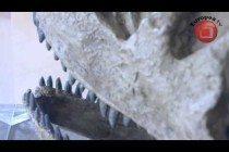Video thumbnail for youtube video Exposición Los animales de piedra: Las huellas del